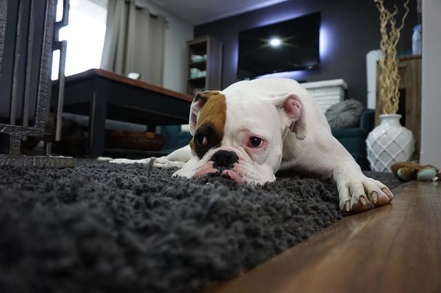 professional carpet cleaners tauranga